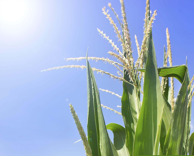 Respaldo A Sector Agrícola