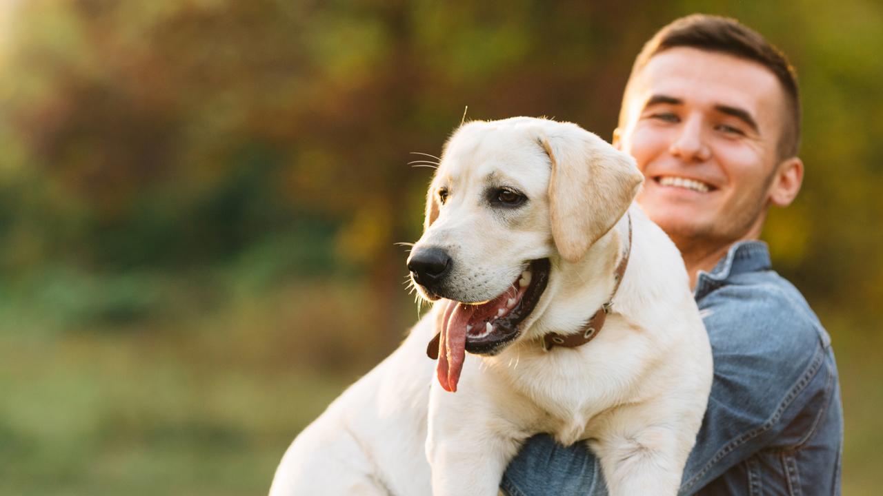Municipio F: Identificación Y Castración Canina