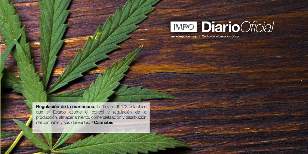 hoja de cannabis sobre superficie de madera