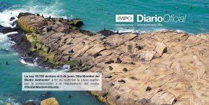 Punta De Piedra Y Mar Con Lobos Marinos